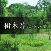 樹木葬の寺 天徳寺 樹木葬について