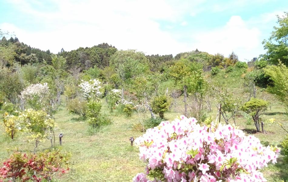 つつじ咲く第一樹木葬地