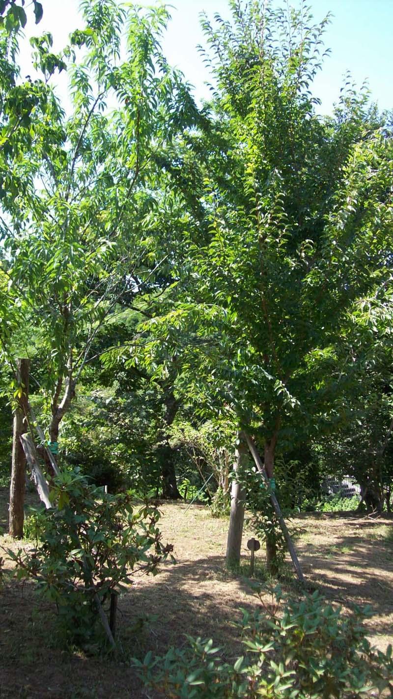 木々が大きく成長し、暑い中も木陰を作ってくれるようになりました。第二樹木葬地