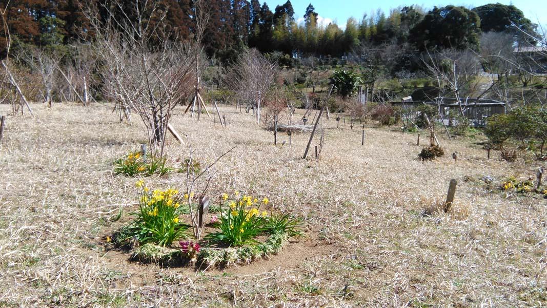 球根で植えた花々も咲き始めました。第三樹木葬地