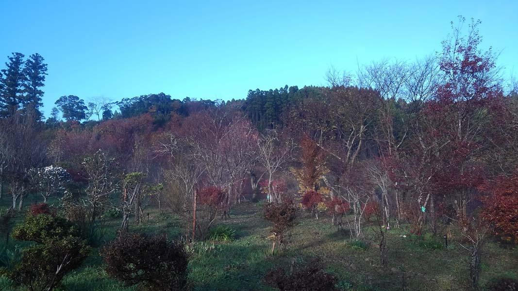 12月に入ってからようやく紅葉が見られました。第二樹木葬地