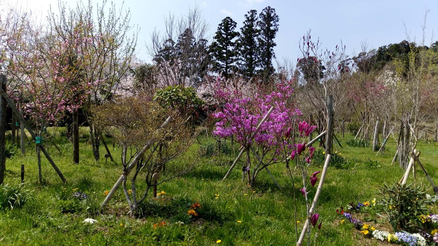 色とりどりの花咲く第二樹木葬地