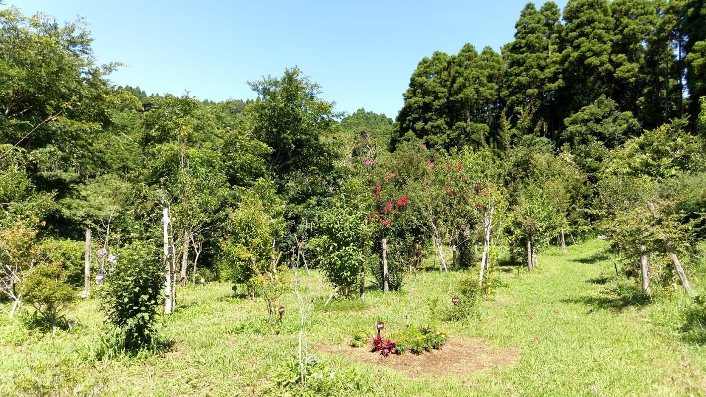 第一樹木葬地