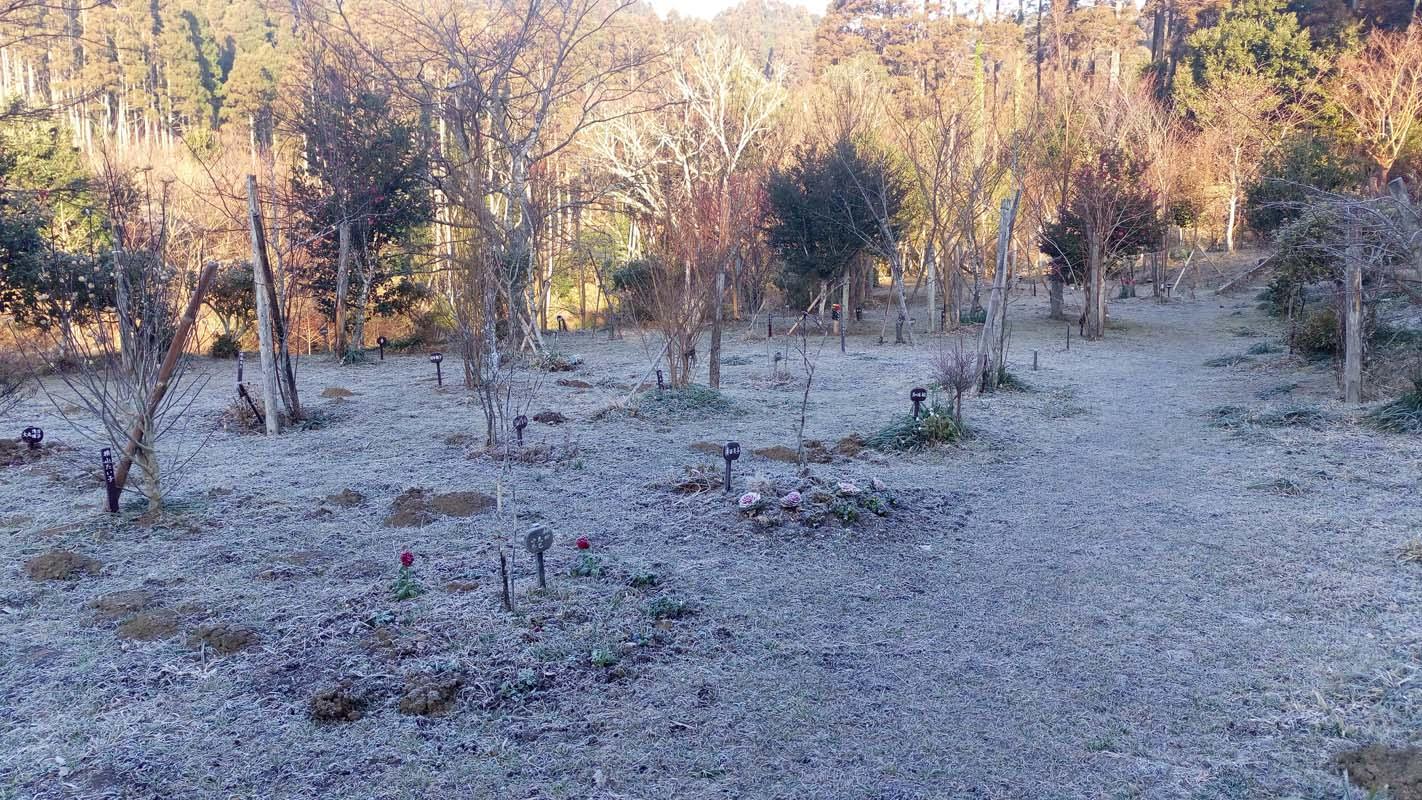 一番寒い時期です。霜に耐え、春を待つ第一樹木葬地