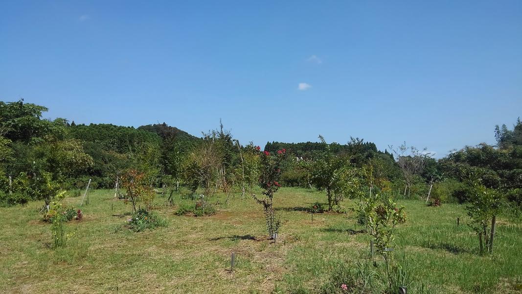 空はすっかり秋空になりました。第三樹木葬地