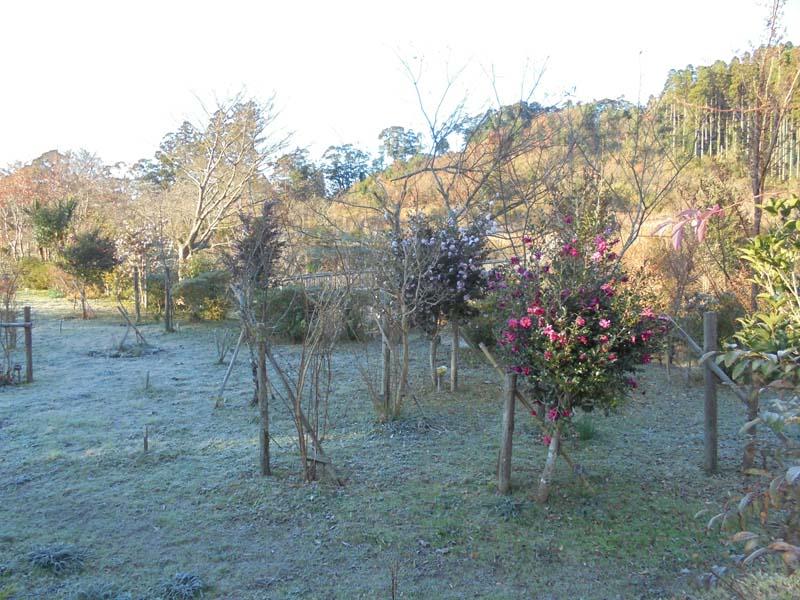 初霜が降りました。第一樹木葬地