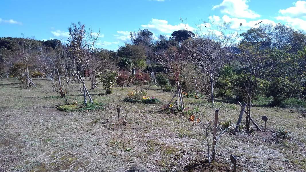 第三樹木葬地