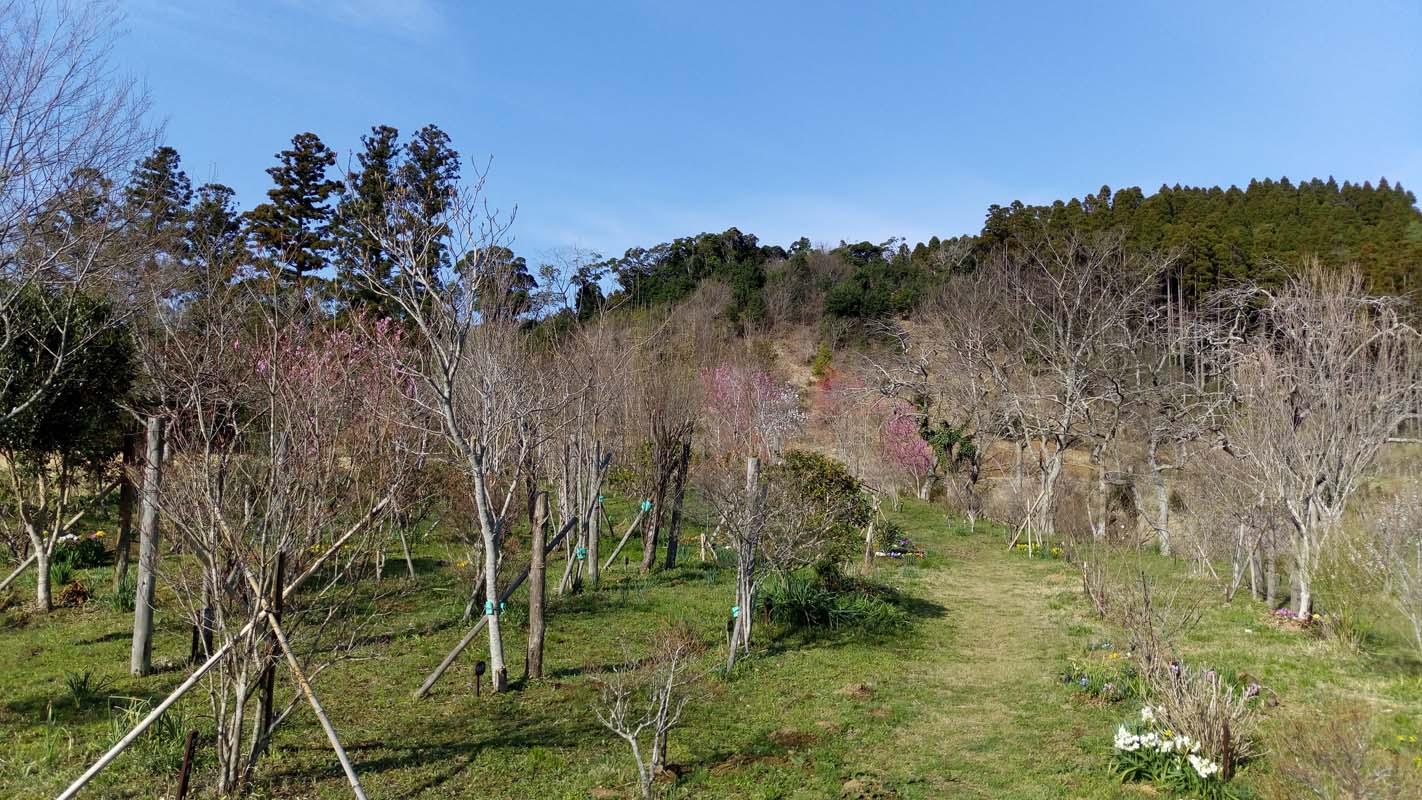 いよいよ一年で一番美しい時期に入ります。第二樹木葬地