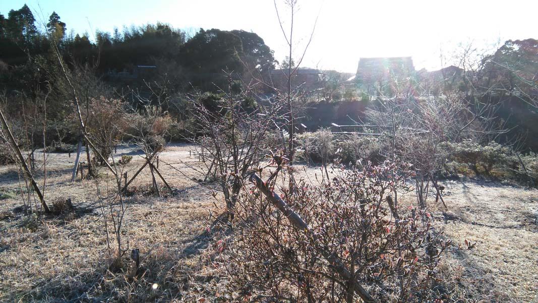 朝日が照らす第三樹木葬地