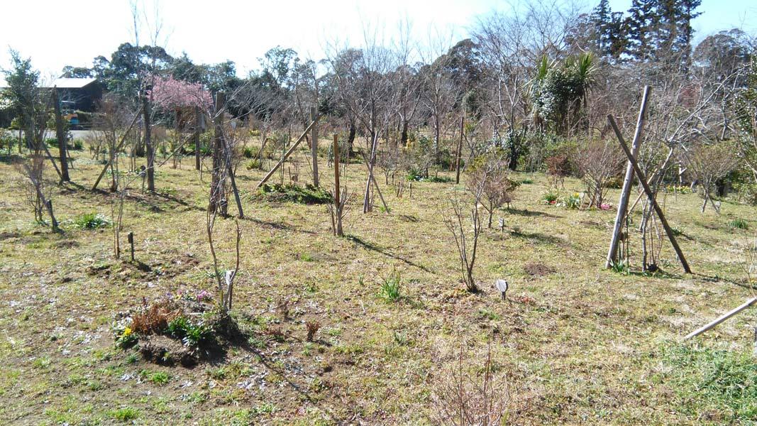 地面に春の草が出始めました。第一樹木葬地