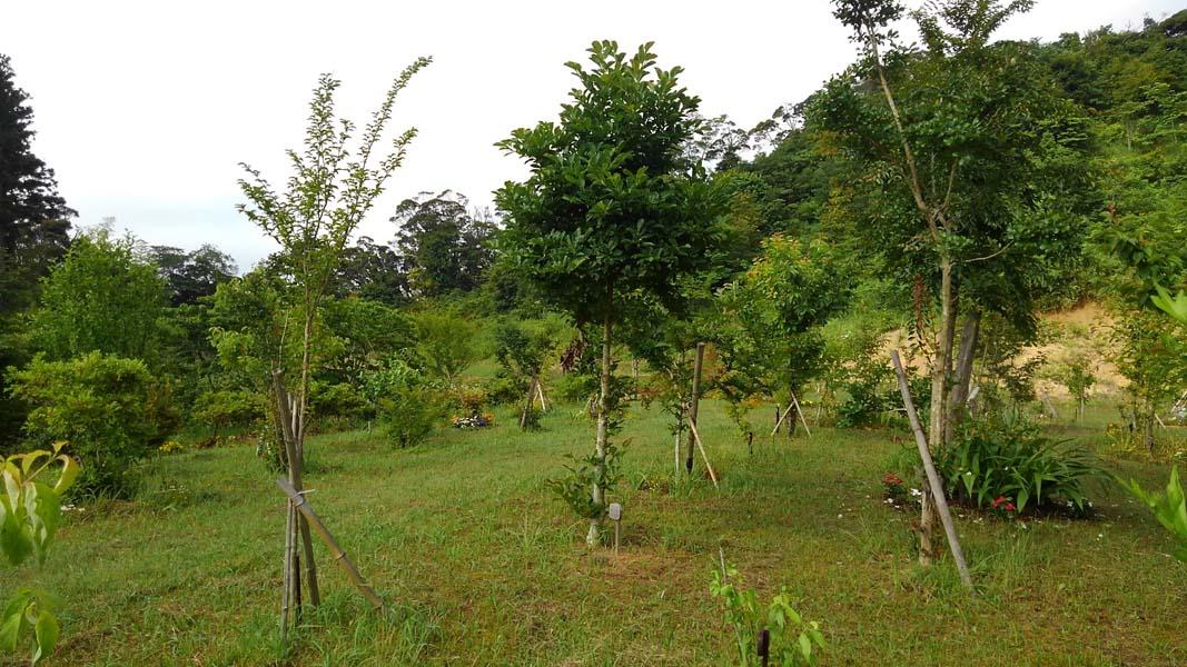 木々と同じく下草もこの時期良く育ちます。草を刈り終えた第三樹木葬地