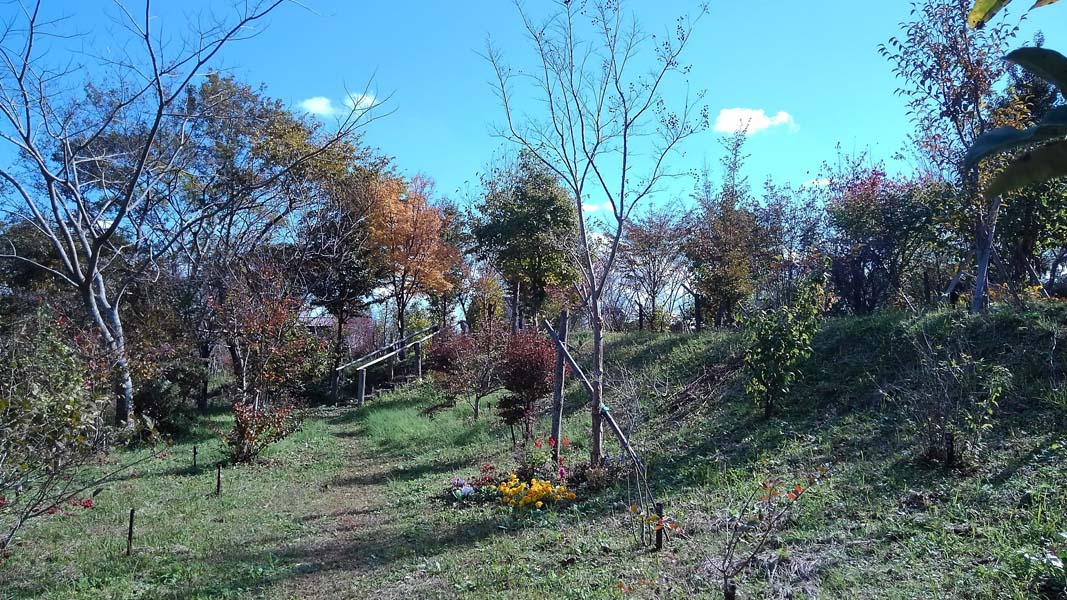 紅葉がほんのり進んでいます。第二樹木葬地