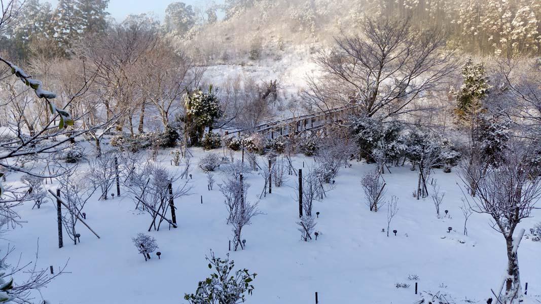 雪が積もる第一樹木葬地