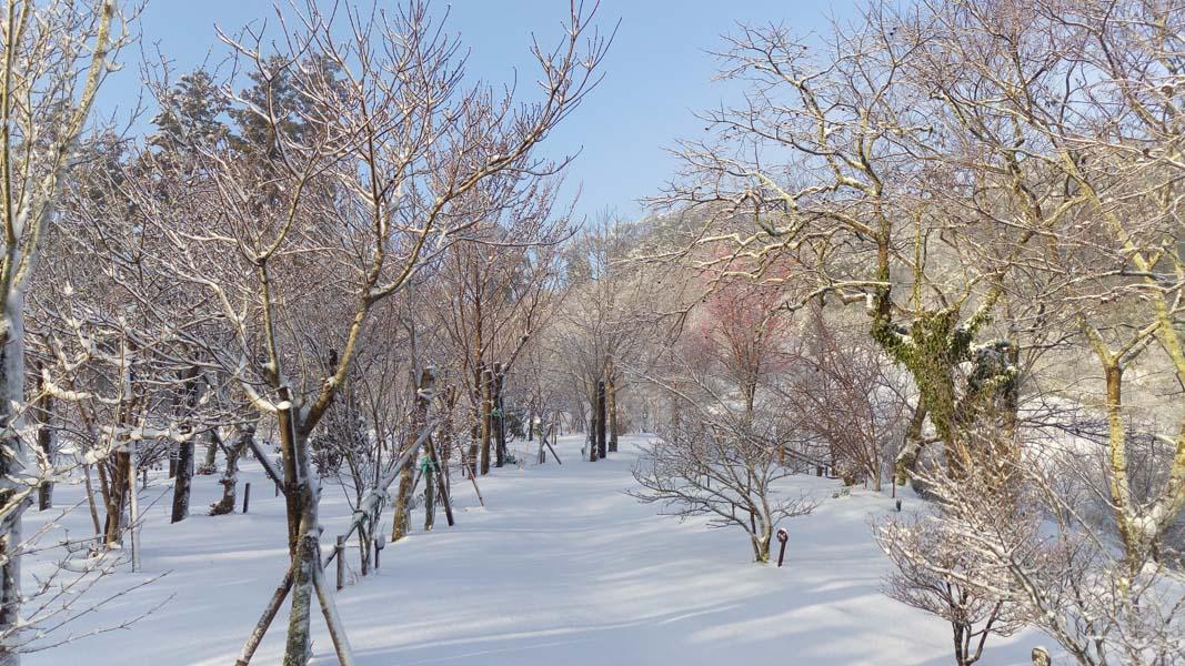 何年振りかの積雪です。第二樹木葬地