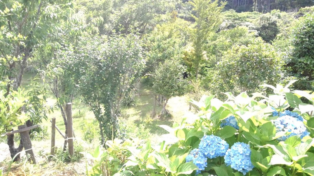 紫陽花から眺める第一樹木葬地