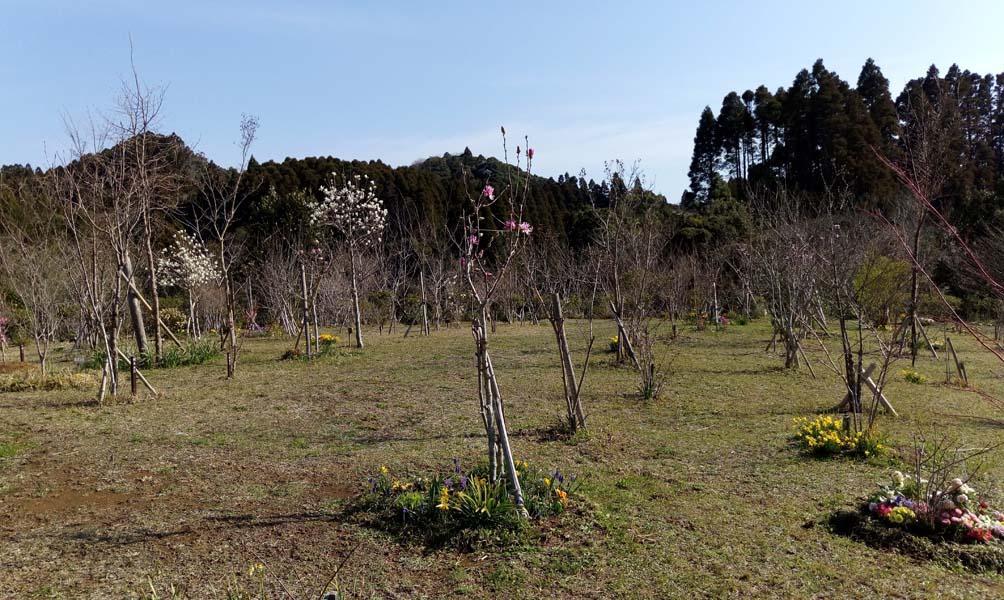 鶯や小鳥たちの声も帰って来ました。第三樹木葬地