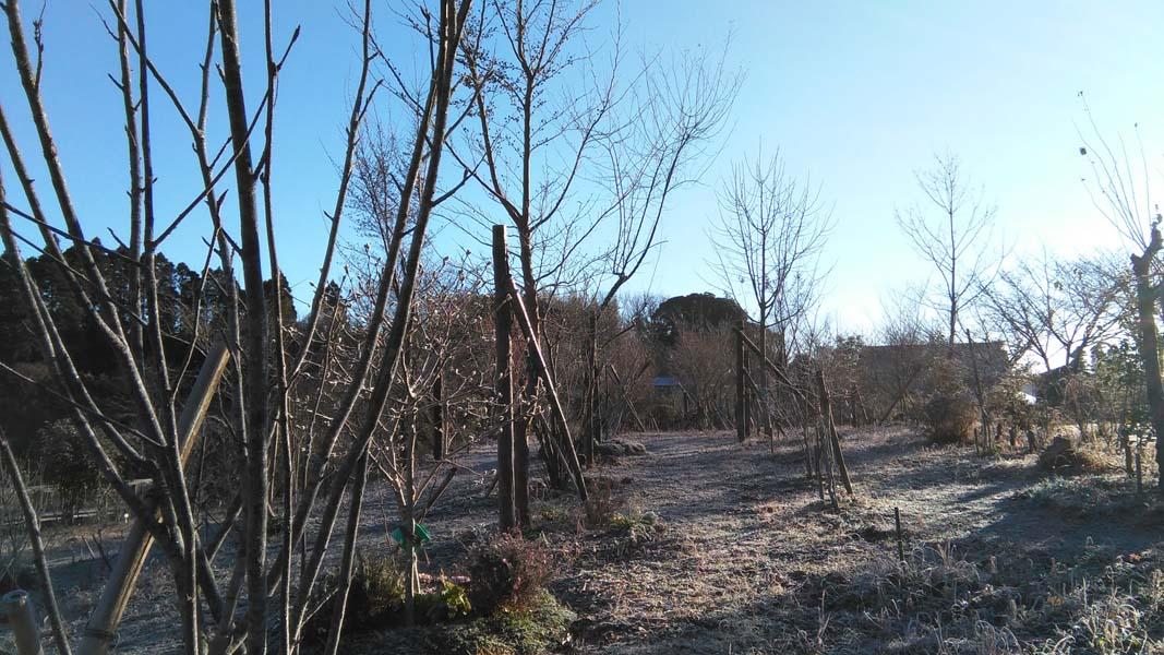天気はいいですが、寒い日が続きます。第二樹木葬地