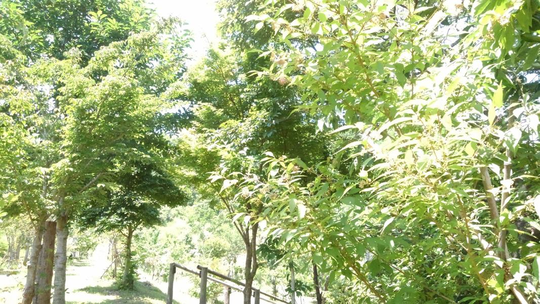 木々が雨の度に枝葉を伸ばします。第二樹木葬地