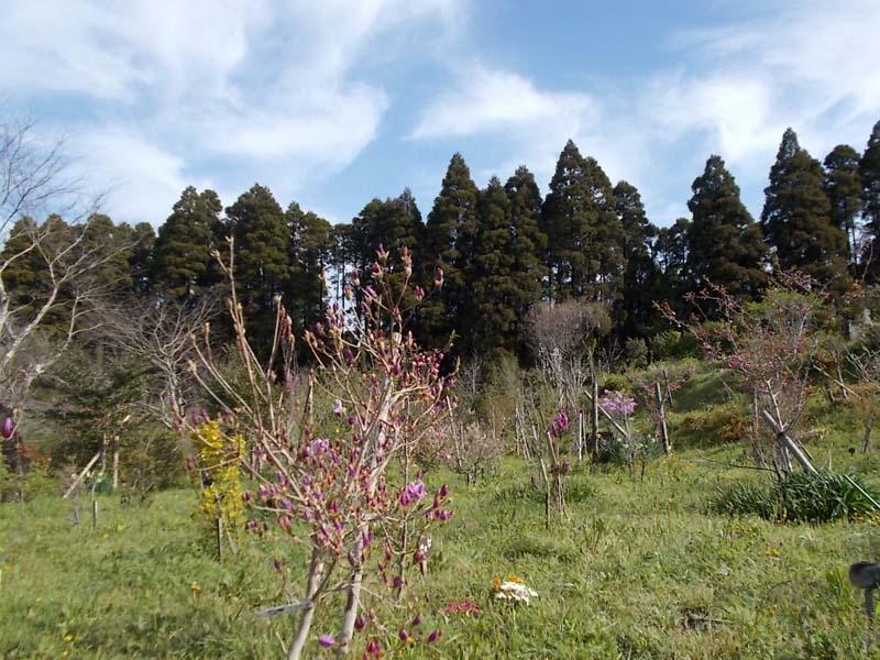 様々な花々が咲き、美しい季節になりました。第一樹木葬地