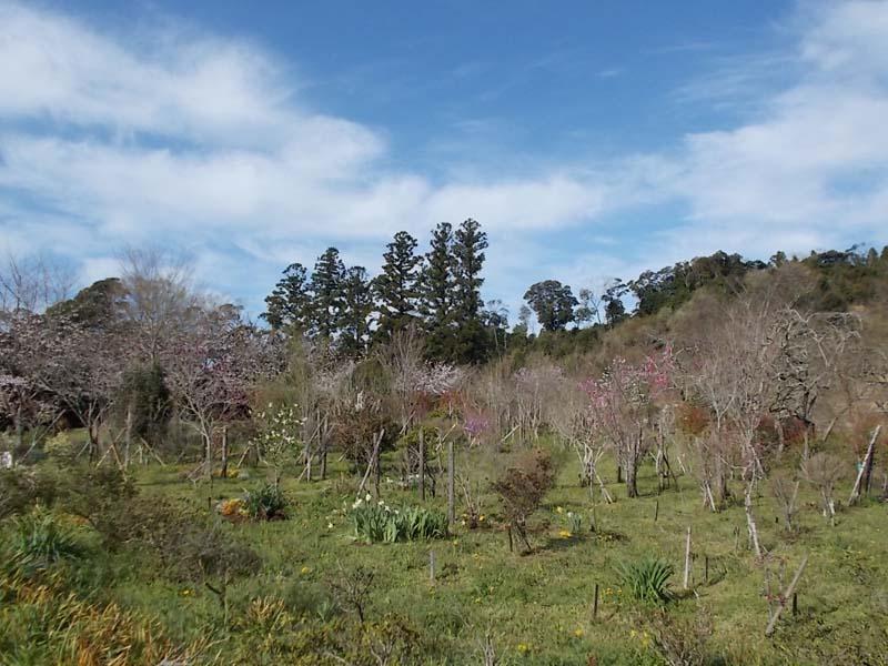 脇に植えた桜と樹木葬地の花とのハーモニーが綺麗です。第二樹木葬地