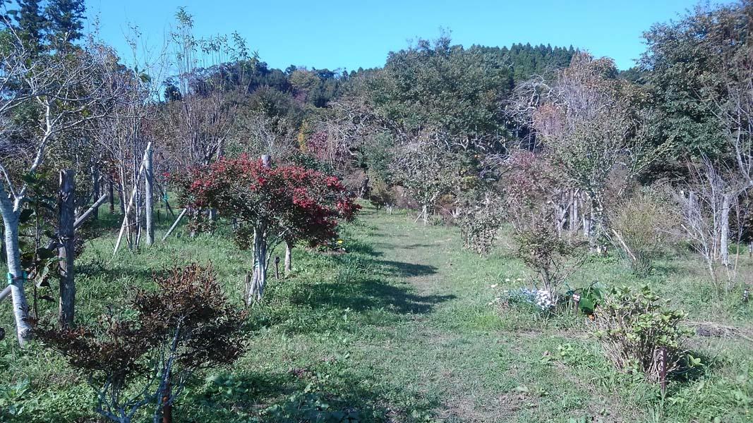 様々な色鮮やかな実が目を楽しませてくれます。第二樹木葬地