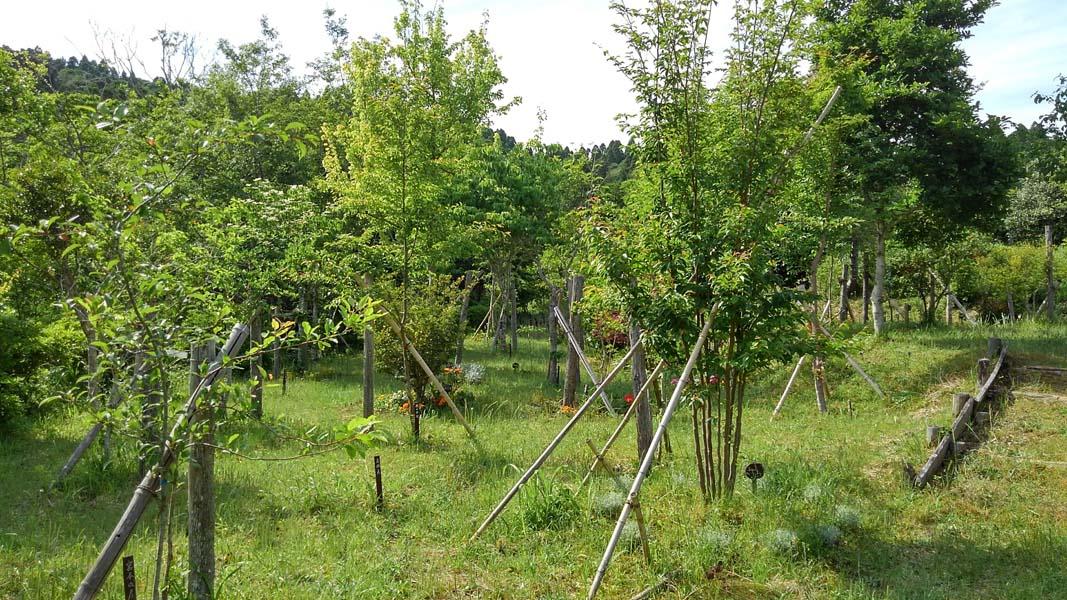 青葉眩しい第一樹木葬地