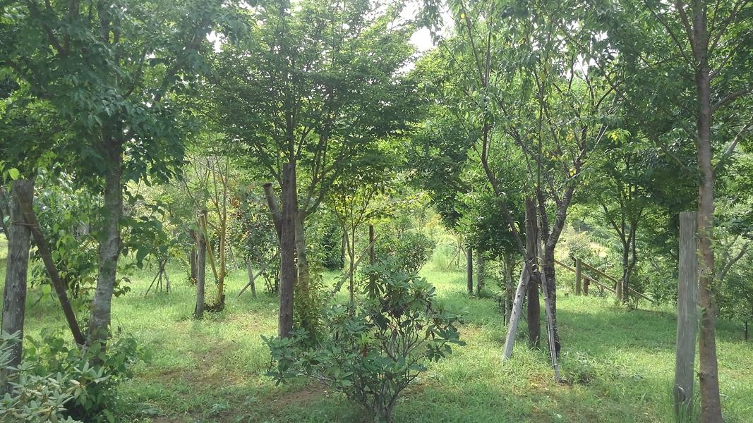 大きな木には木陰が出来て涼しそうです。第二樹木葬地