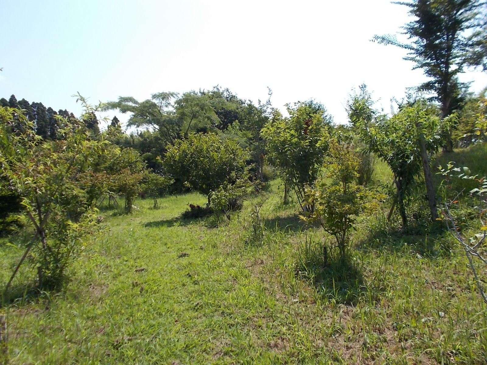 暑さの中でも木々は元気に成長しています。第一樹木葬地