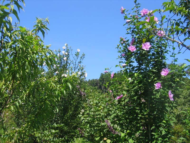 木々が競うように枝を伸ばします。第二樹木葬地