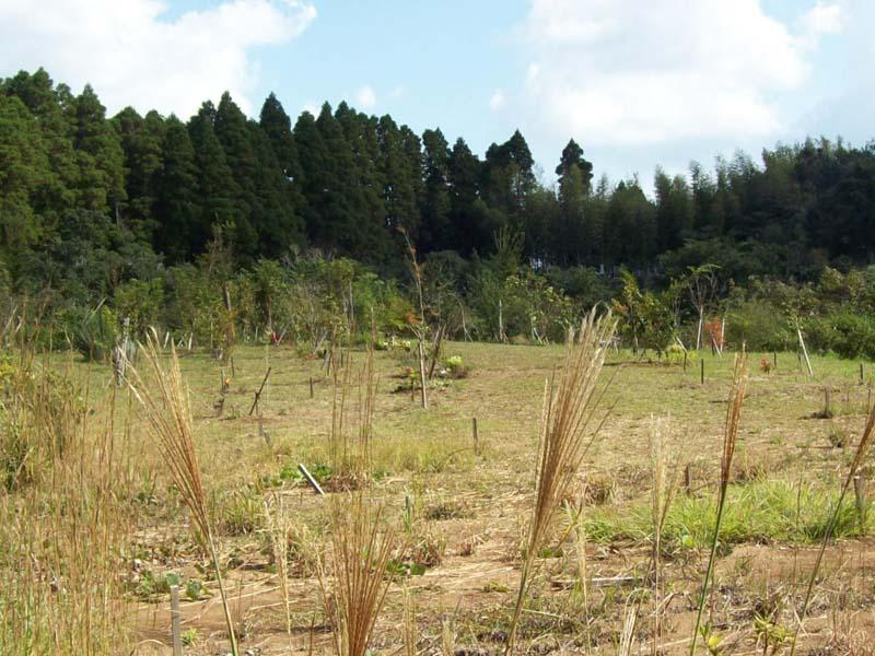 ススキの穂がさやめく第三樹木葬地