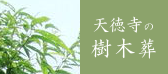 樹木葬の寺・天徳寺