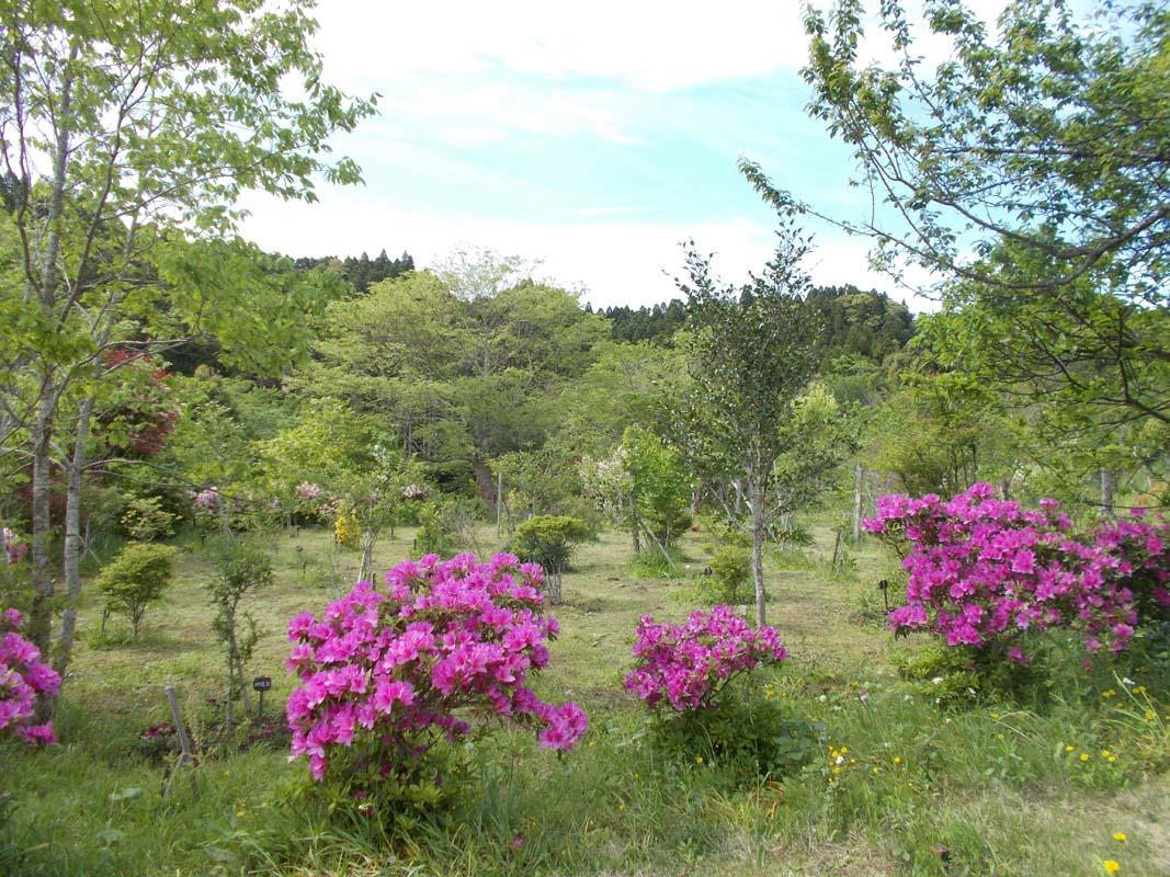 ツツジが美しい季節になりました。第一樹木葬地