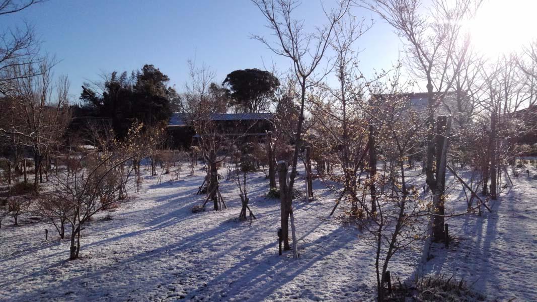 朝日さす第二樹木葬地