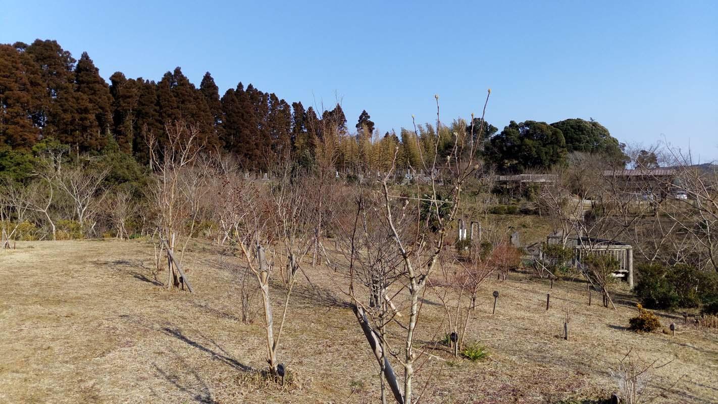 つぼみが春を待っています。第三樹木葬地