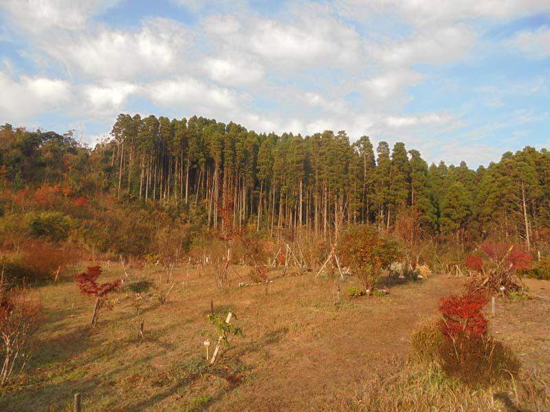 山も紅葉で色づきました。第三樹木葬地