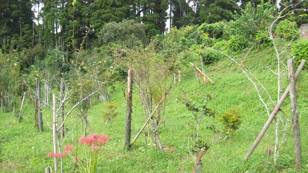 彼岸花咲く第一樹木葬地