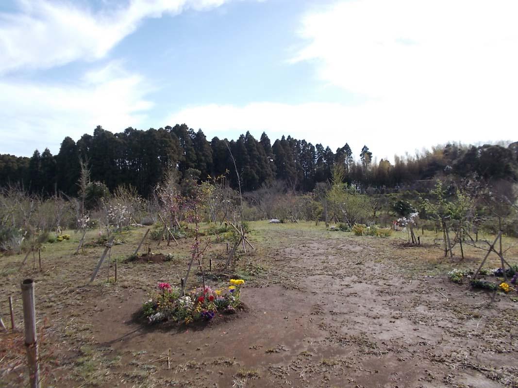 温かくなったので、訪れて花を植える方も増えました。第三樹木葬地
