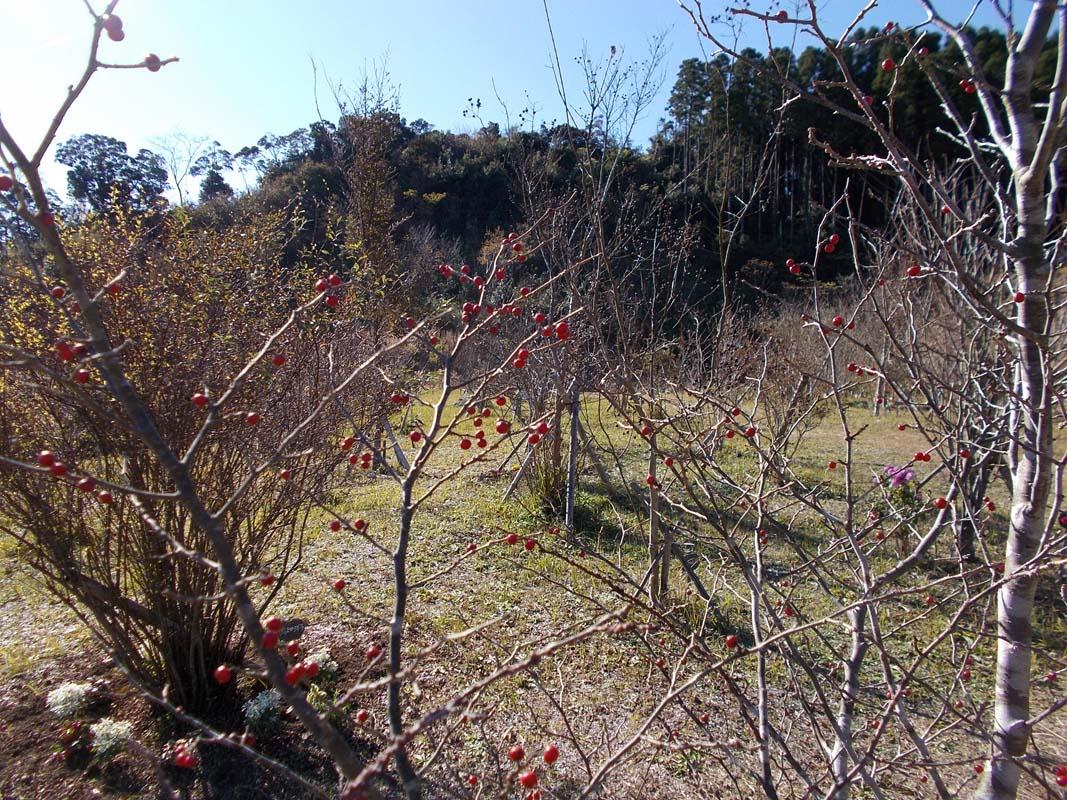 あちこちに赤い実が見られます。第三樹木葬地