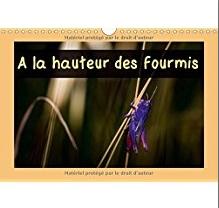 Calendrier de macro photographies d'insectes