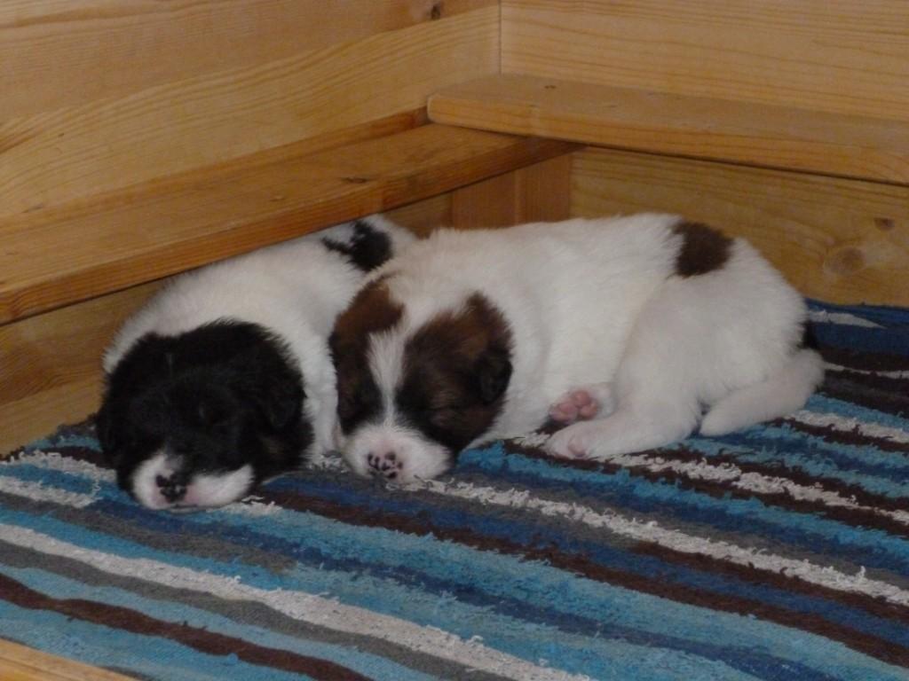 Bijou und Barney