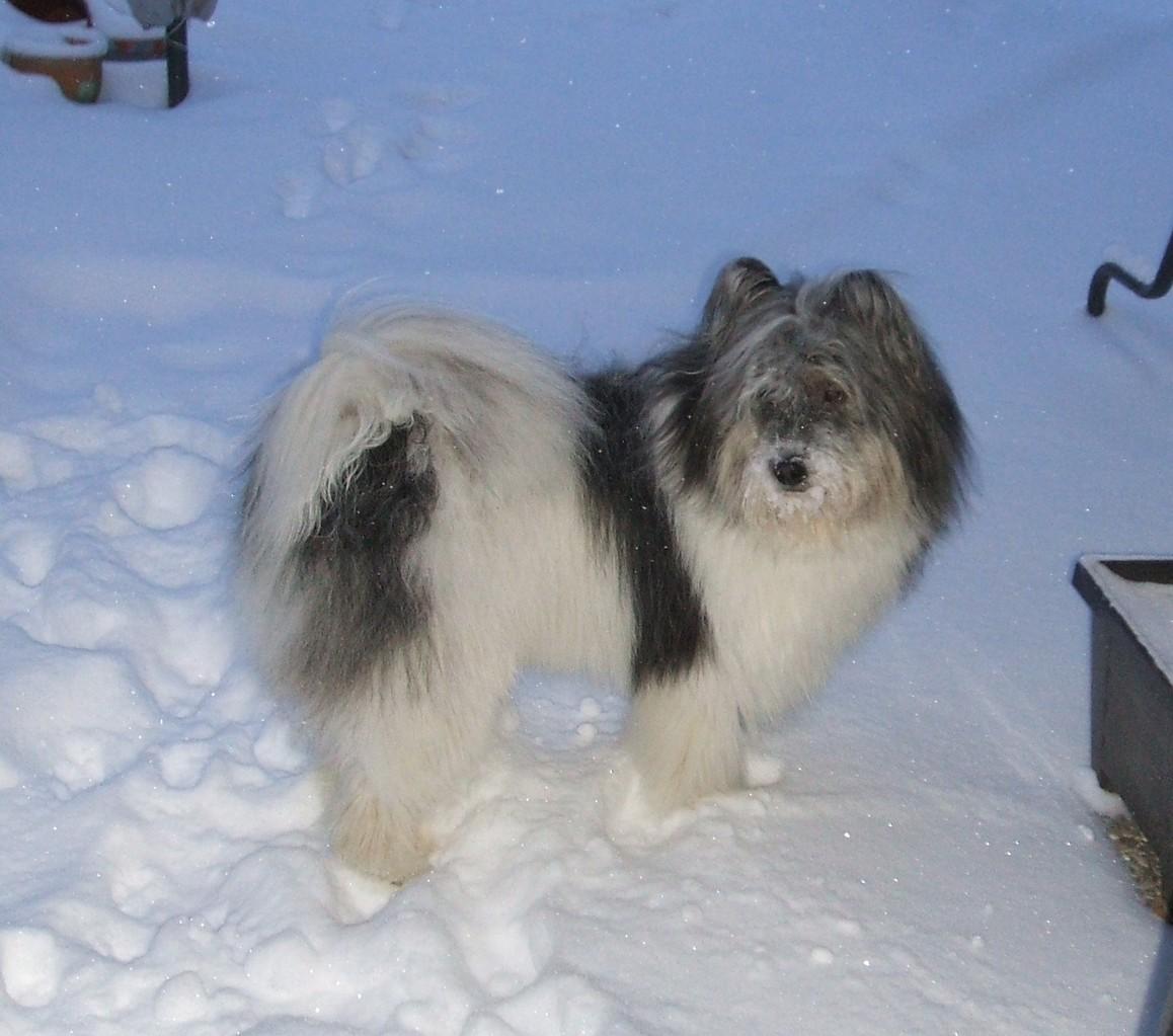 Anzo im Schnee
