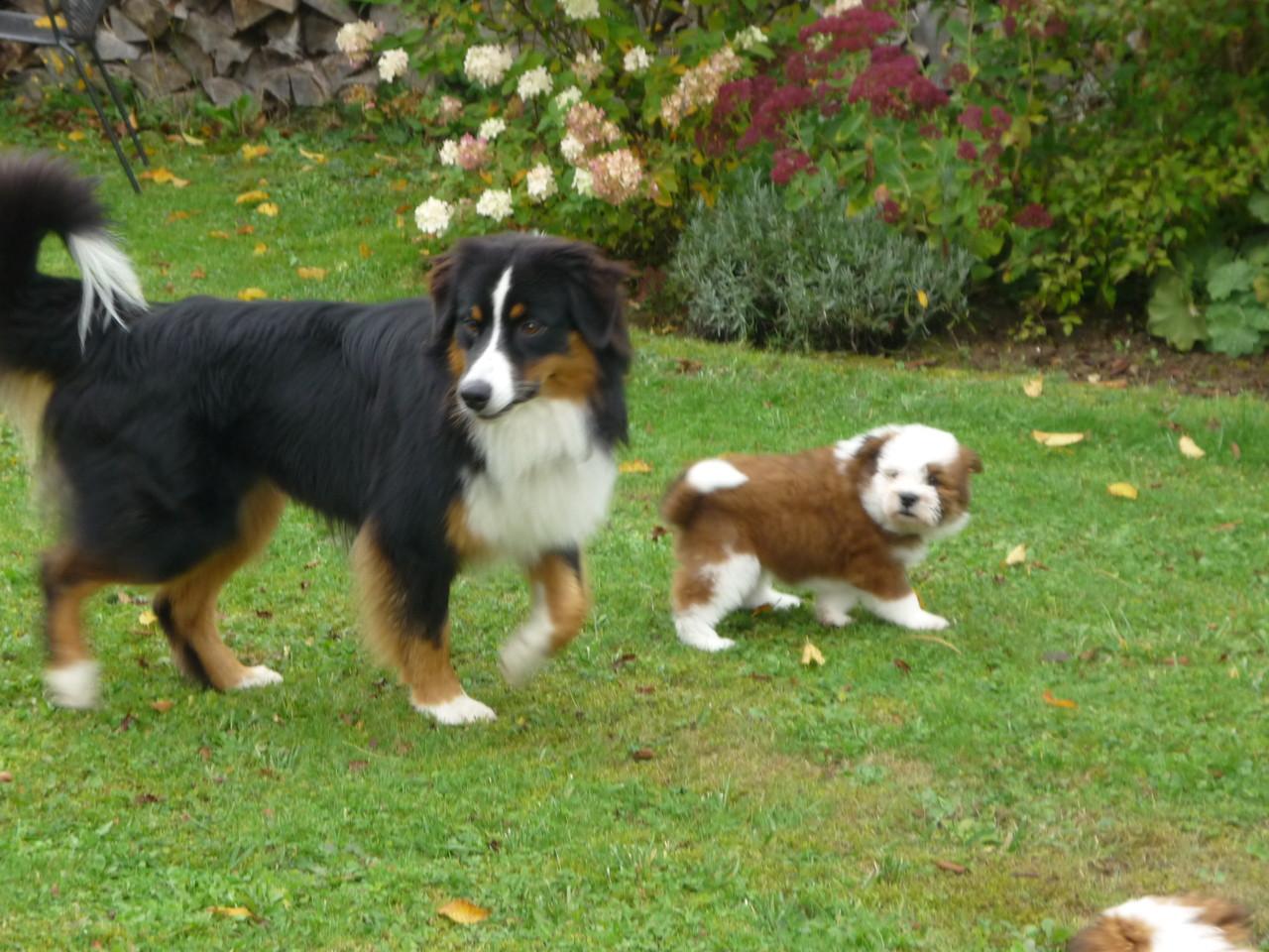 Leo und Camillo