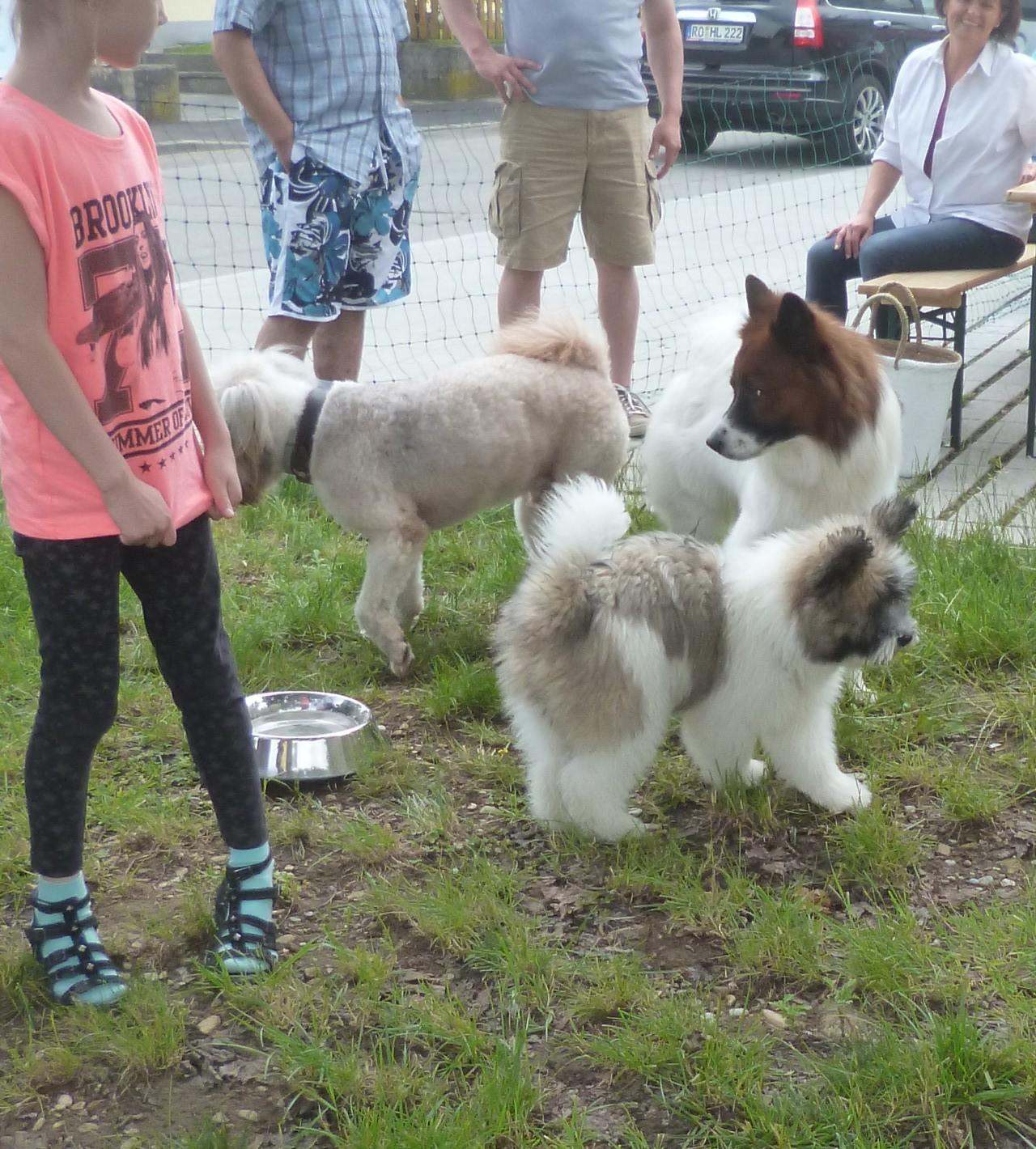 Sammy, Bailey, Balu