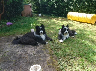 Gaya - Mollie und Giotto - Loki