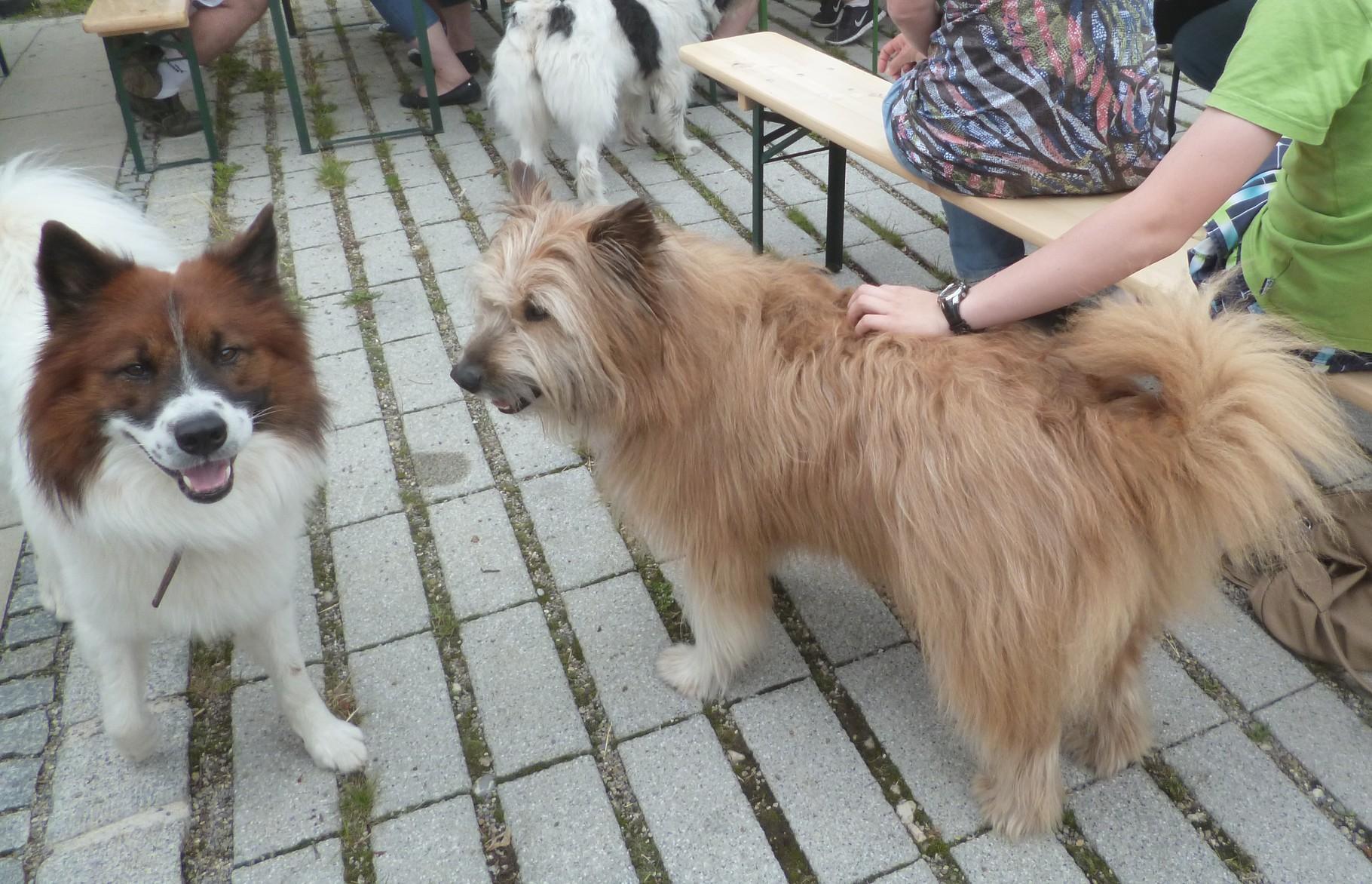 Bailey und Arco