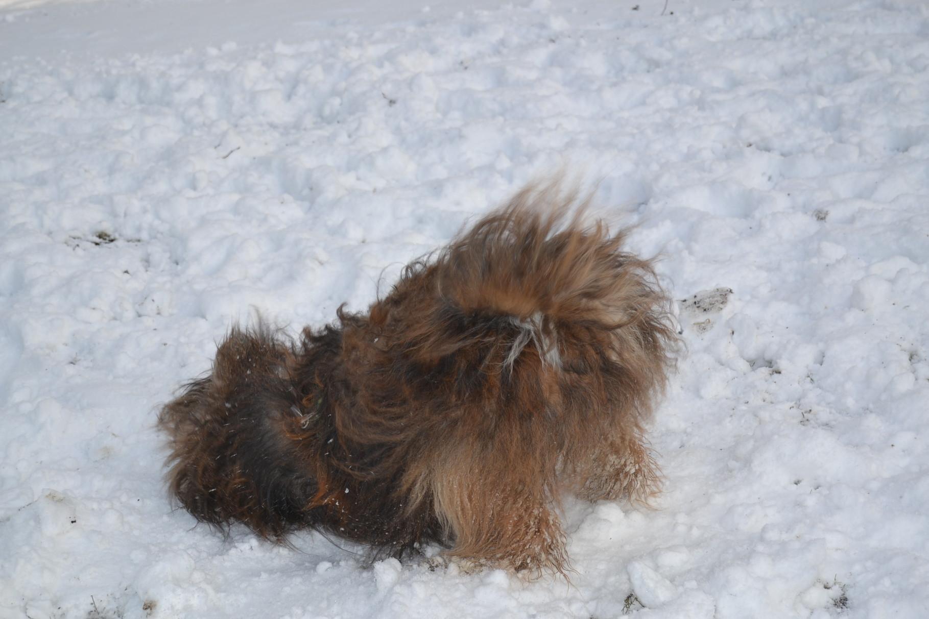 Mandas erster Schnee diesen Winter