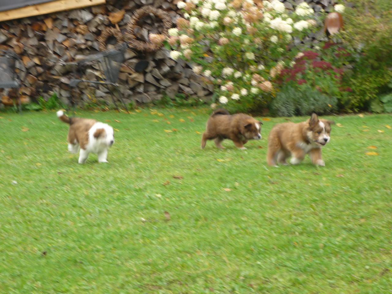 Noch sind die Kleinen allein im Garten