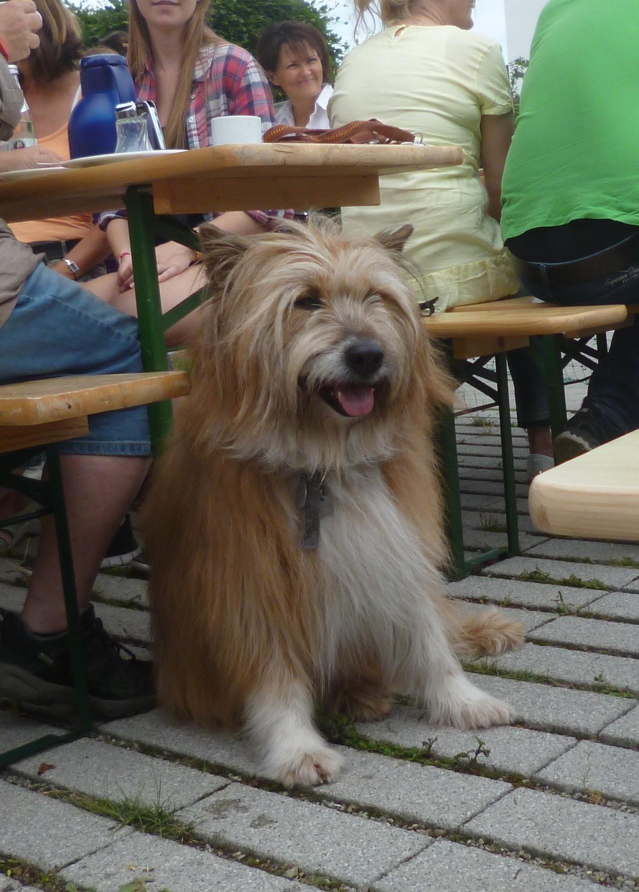 Benny; Hundekumpel von Aryna / Bijou