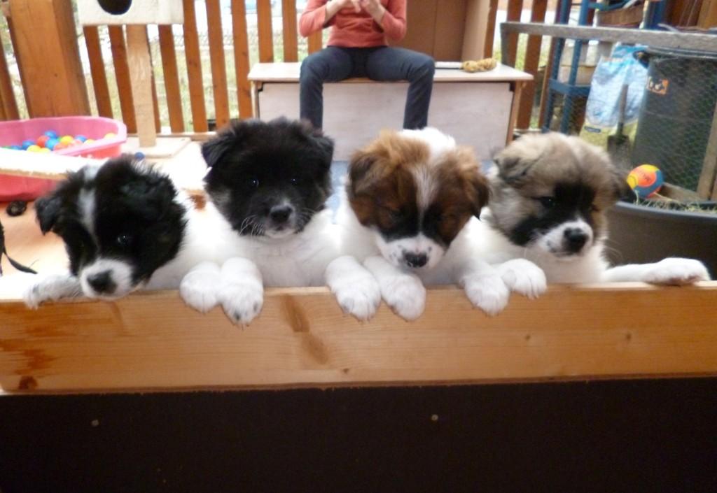 Phoebe, Birka, Baileys und Bilbo
