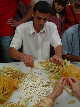 Un concours d'écossage en frais est organisé en Béarn lors de la fête du haricot maïs en septembre.
